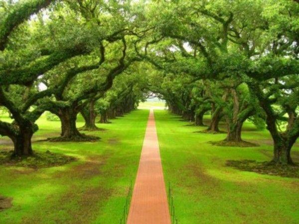 Les arbres en général 00930203