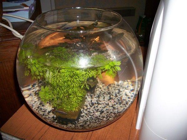 N 5 aquarium for Aquarium poisson rouge boule