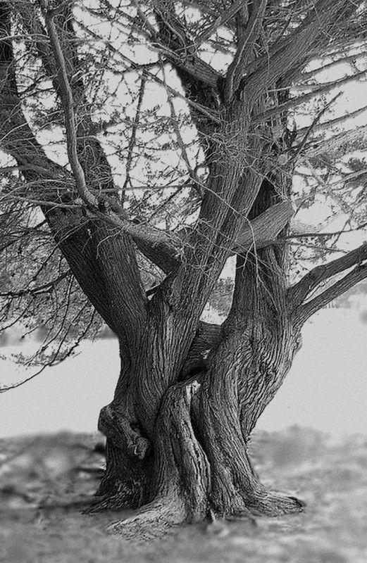 Les arbres en général 2279b52e