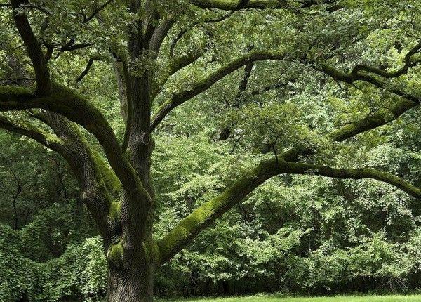 Les arbres en général 257fd3b9