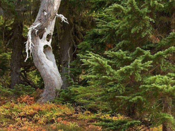 Les arbres en général 3a2f089c