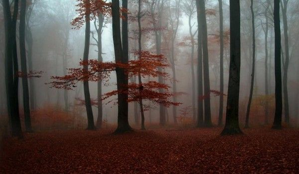 Les arbres en général 3b38661a