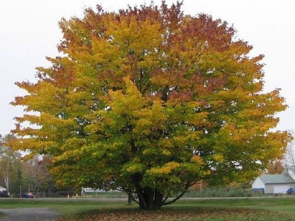 Les arbres en général 3b51039b