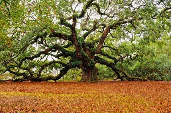 Les arbres en général 3f822746