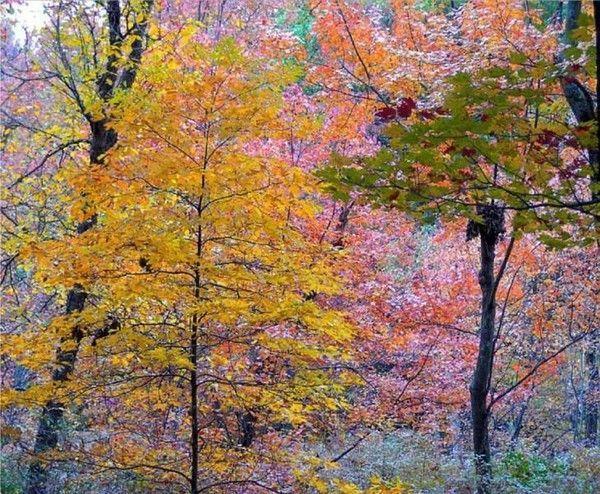 Les arbres en général 48f40a9e