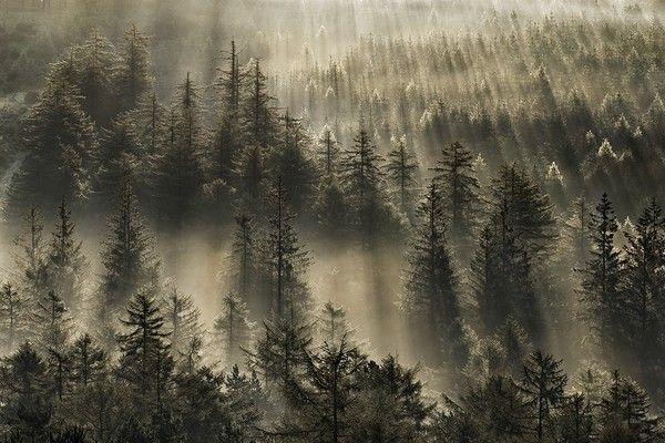 Les arbres en général 58962ea5