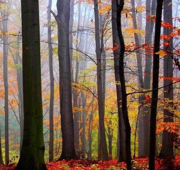 Les arbres en général 59c74f07