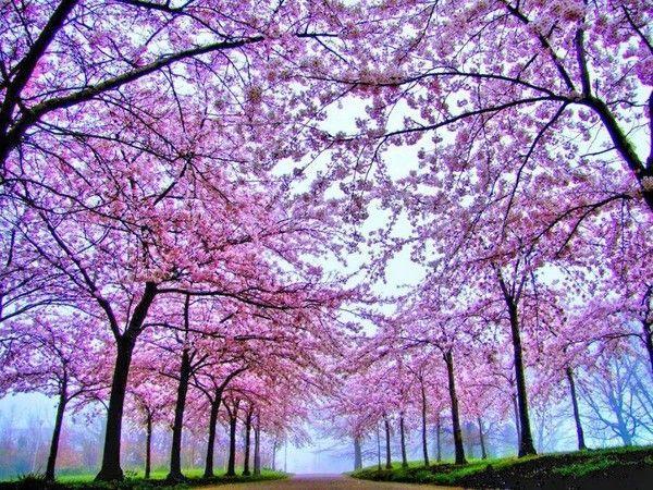 Les arbres en général 59d5501b