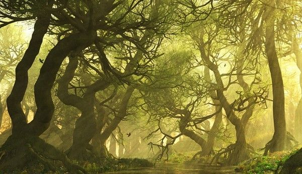 Les arbres en général 690d936d