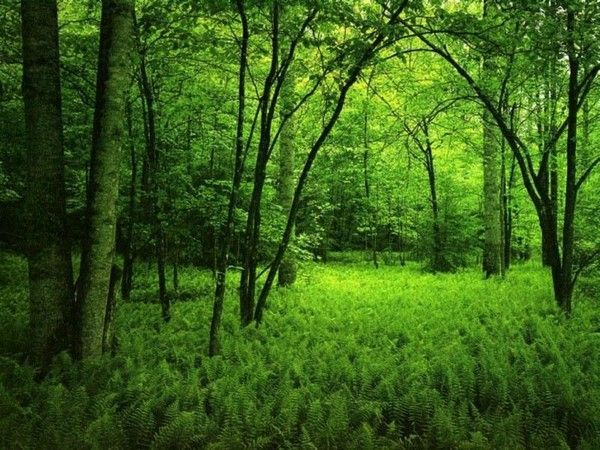 Les arbres en général 800180bd