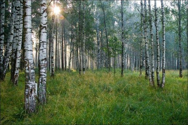 Les arbres en général 819c575f