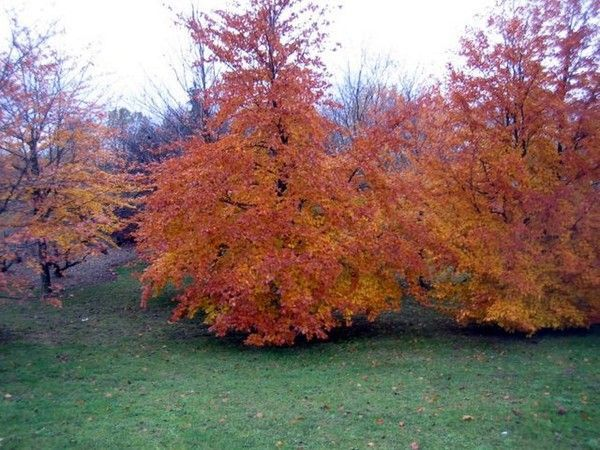 Les arbres en général 8f8ab637