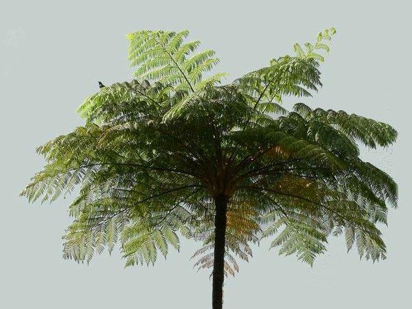 Les arbres en général 9082f8e6