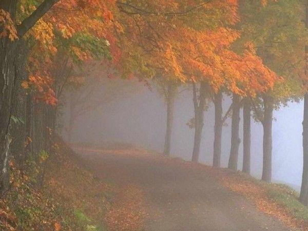 Les arbres en général 9528b3de
