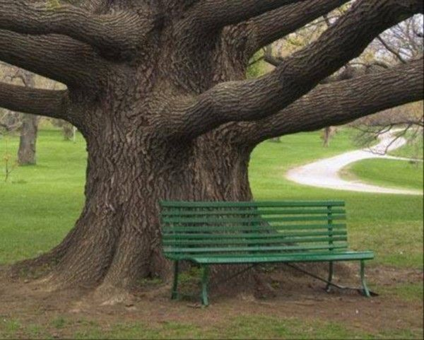 Les arbres en général 9577b084