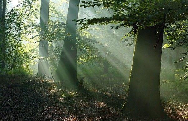 Les arbres en général 9607a491