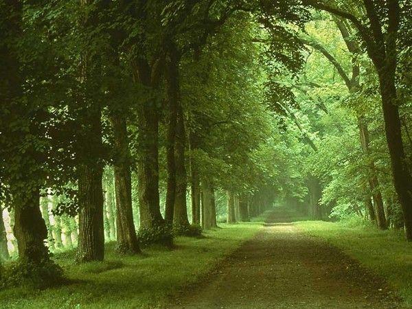Les arbres en général 9e34fed7