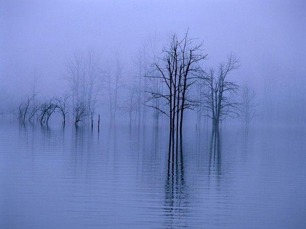 Les arbres en général A4057ead