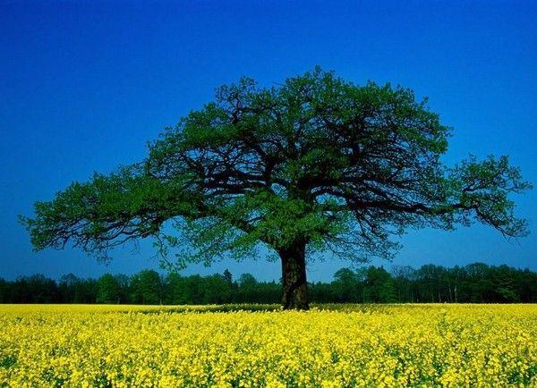 Les arbres en général A6983b6a
