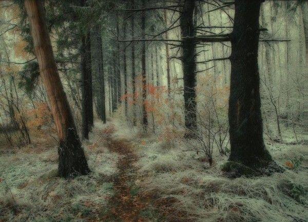 Les arbres en général B803a3a3