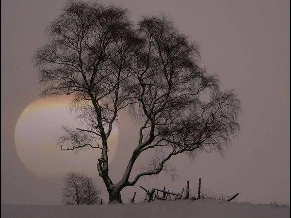 Les arbres en général Bcdf8c46