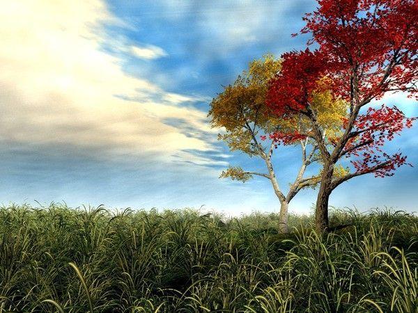 Les arbres en général C0ec42c5
