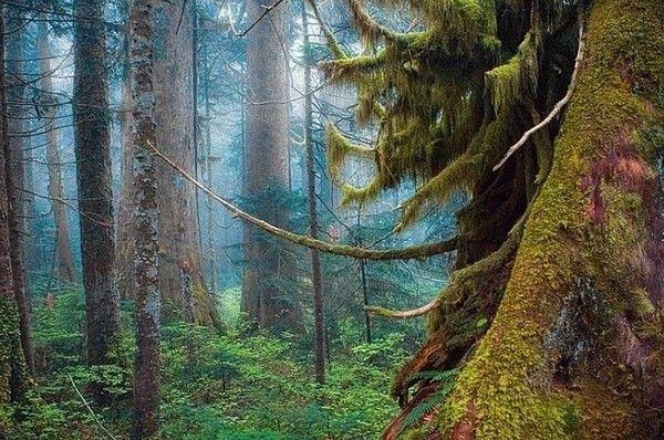 Les arbres en général C150cd0f