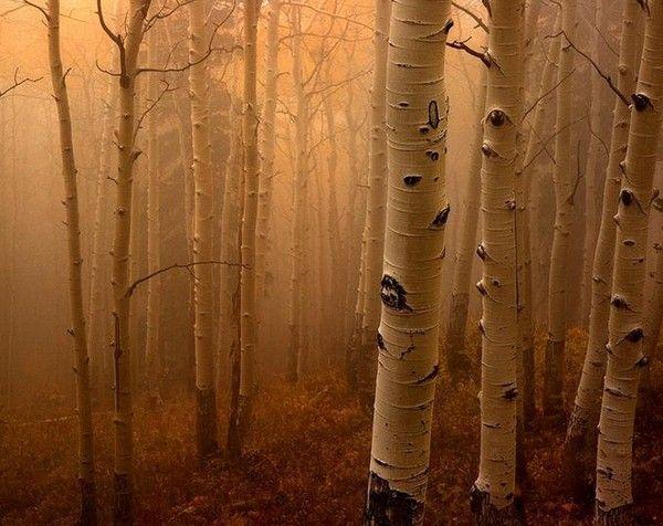 Les arbres en général C1bc8f53