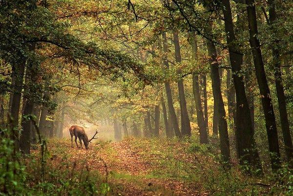 Les arbres en général D5c5713d