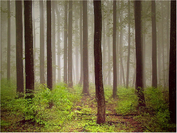 Les arbres en général Dc628d02