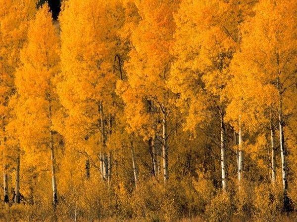 Les arbres en général F007fd67