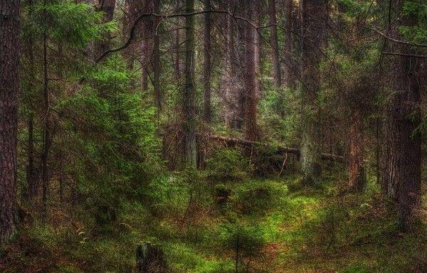 Les arbres en général F1a8bb16