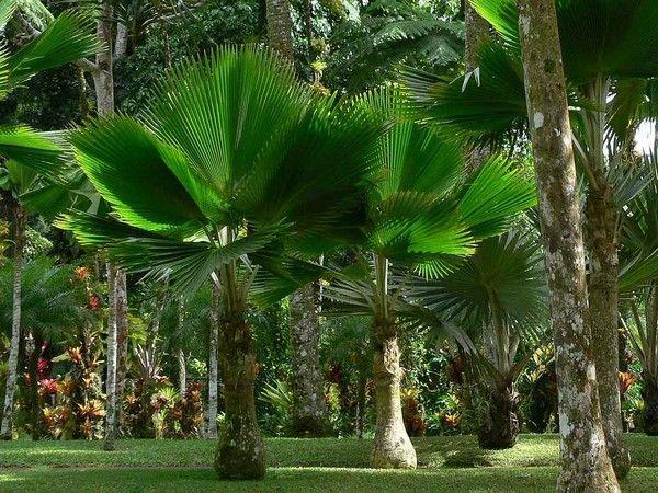 Les arbres en général F64f15d2