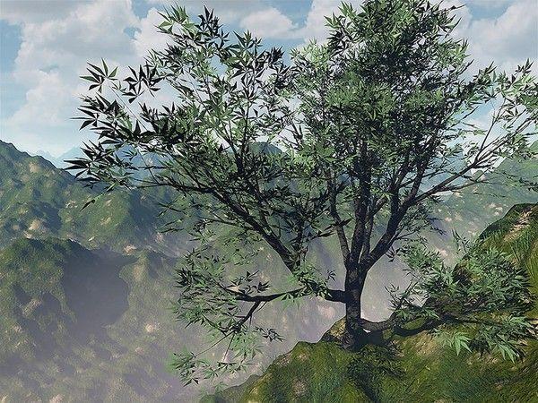 Les arbres en général F7a0935d