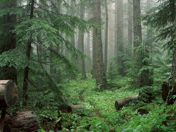 Les arbres en général F858d09e